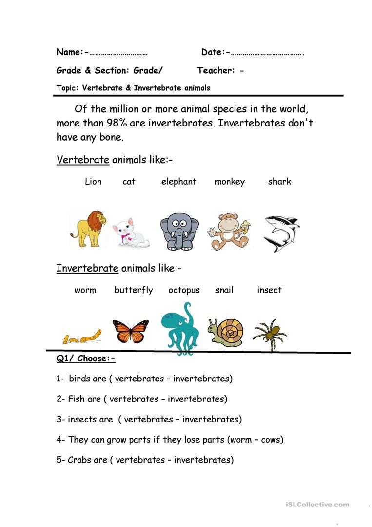 Vertebrate Invertebrate English Esl Worksheets For Distance Learning And Physical Classroo Vertebrates And Invertebrates Vertebrates Animals With Backbones Free printable biology worksheets