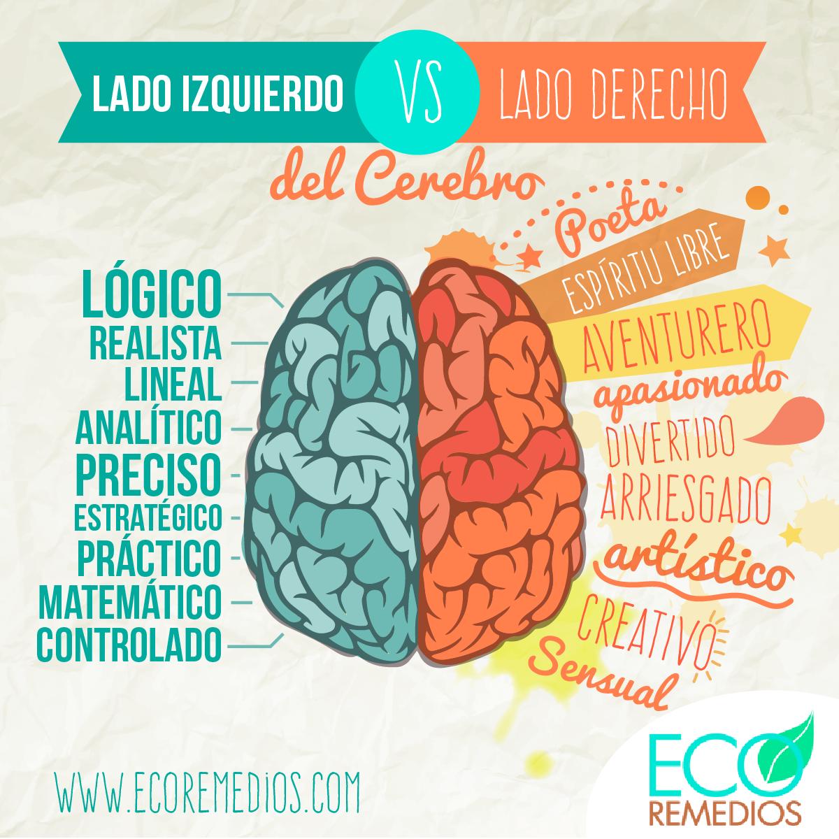 Infografia #Cerebro lado izquierdo #vs lado derecho #Creativo vs ...