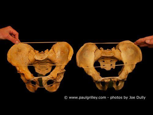 Yin Yoga Teacher Training with Paul Grilley: Bone Photo Images Acet Frontview