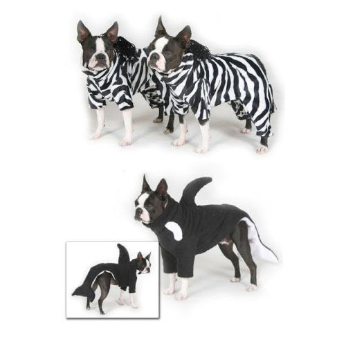 Dog · Zebras and Killer Whales Halloween Costumes ...  sc 1 st  Pinterest & Zebras and Killer Whales Halloween Costumes of Boston Terrier Dogs ...