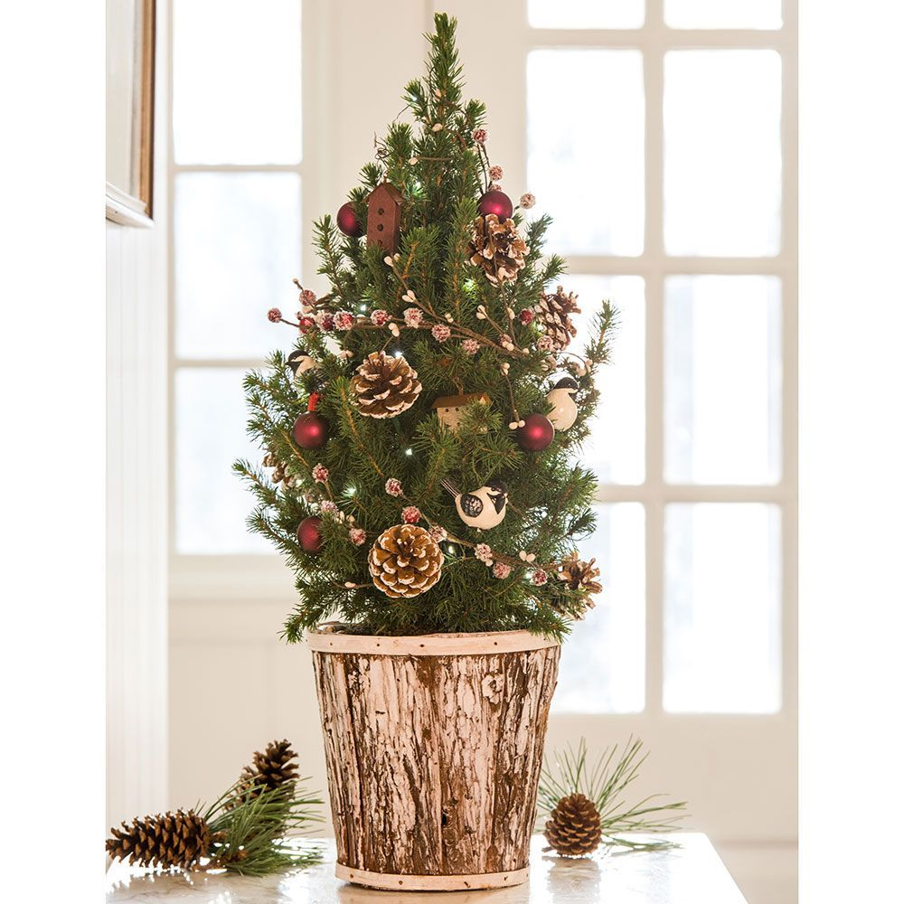 Chickadee Tabletop Tree Potted Christmas Trees Christmas Window Decorations Live Christmas Trees