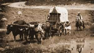 Oxen was the preferred animal to pull a covered wagon on the Oregon Trail.