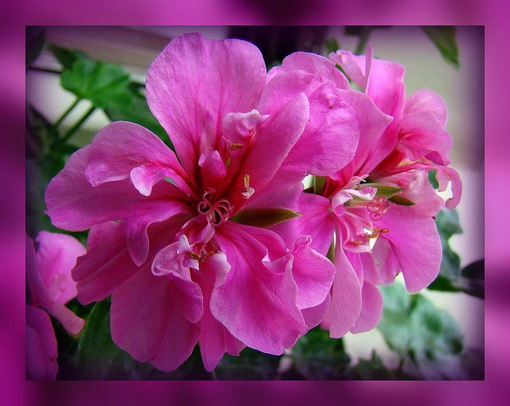 https://flic.kr/p/5JjWgM   Flowers   Flowers