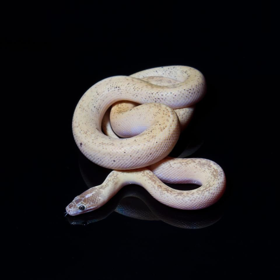 Marble Childrens Python