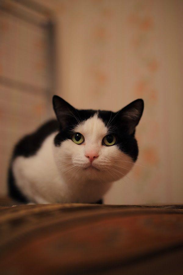 Photo Cat by Alexey Kokurin on 500px
