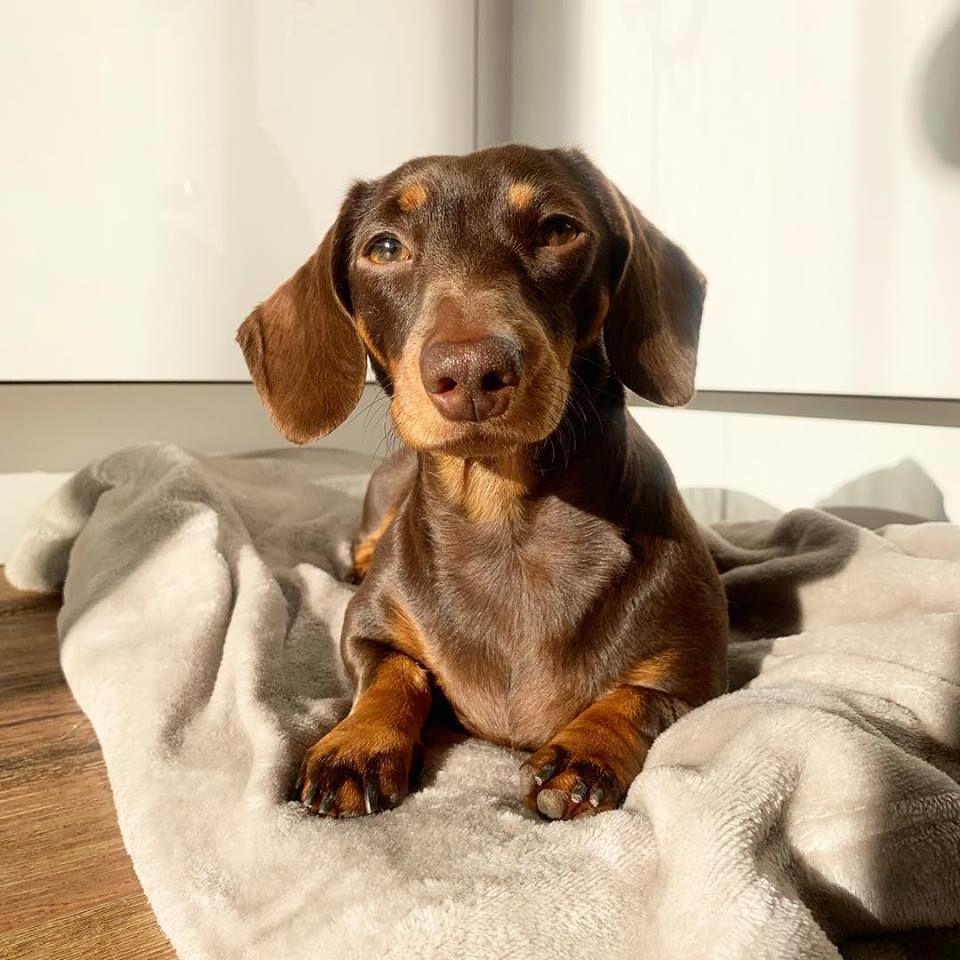 Mmmm Warm Sunny Spots Dachshund Puppies Weenie Dogs Dachshund