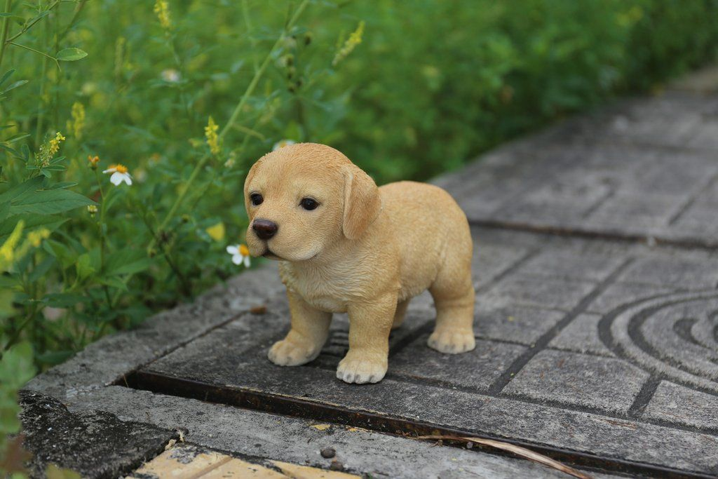 Justamere Ranch Has Labrador Retriever Puppies For Sale In