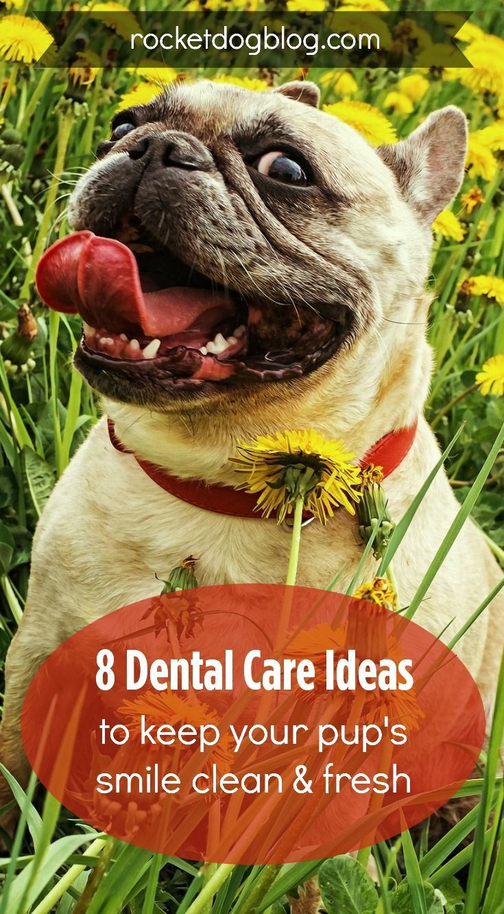 8 Dental Care Ideas for Your Dog (With images) Pet