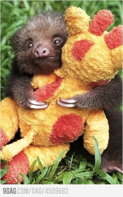 Sloth love xx