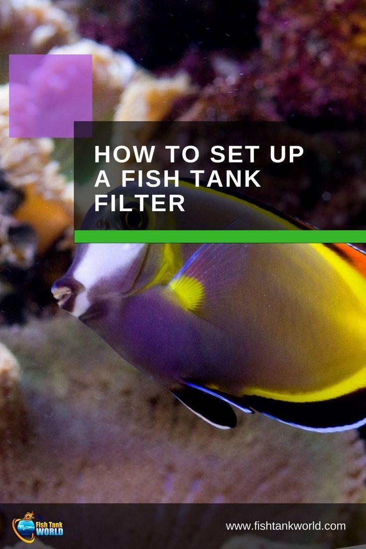 Aquarium filter setup guide to proper installation fish