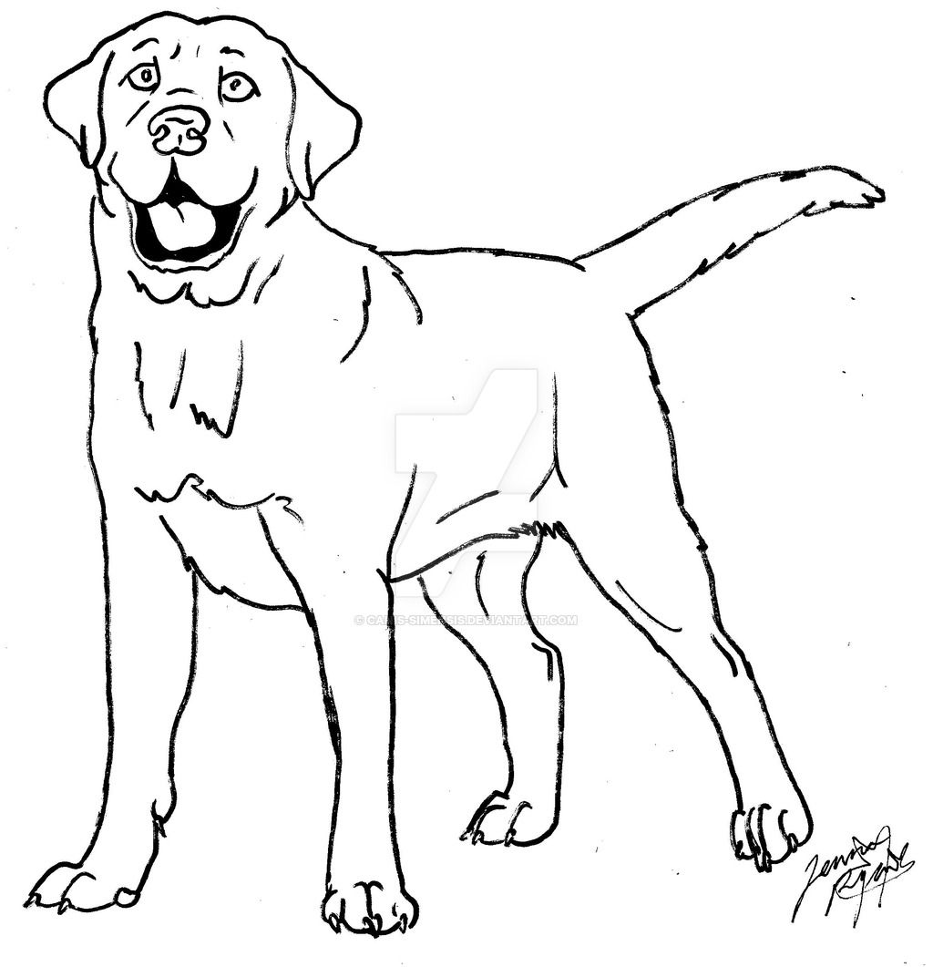 Lab Dogs Coloring Pages Puppy Coloring Pages Dog Coloring Page Black Labs Dogs [ 1061 x 1024 Pixel ]