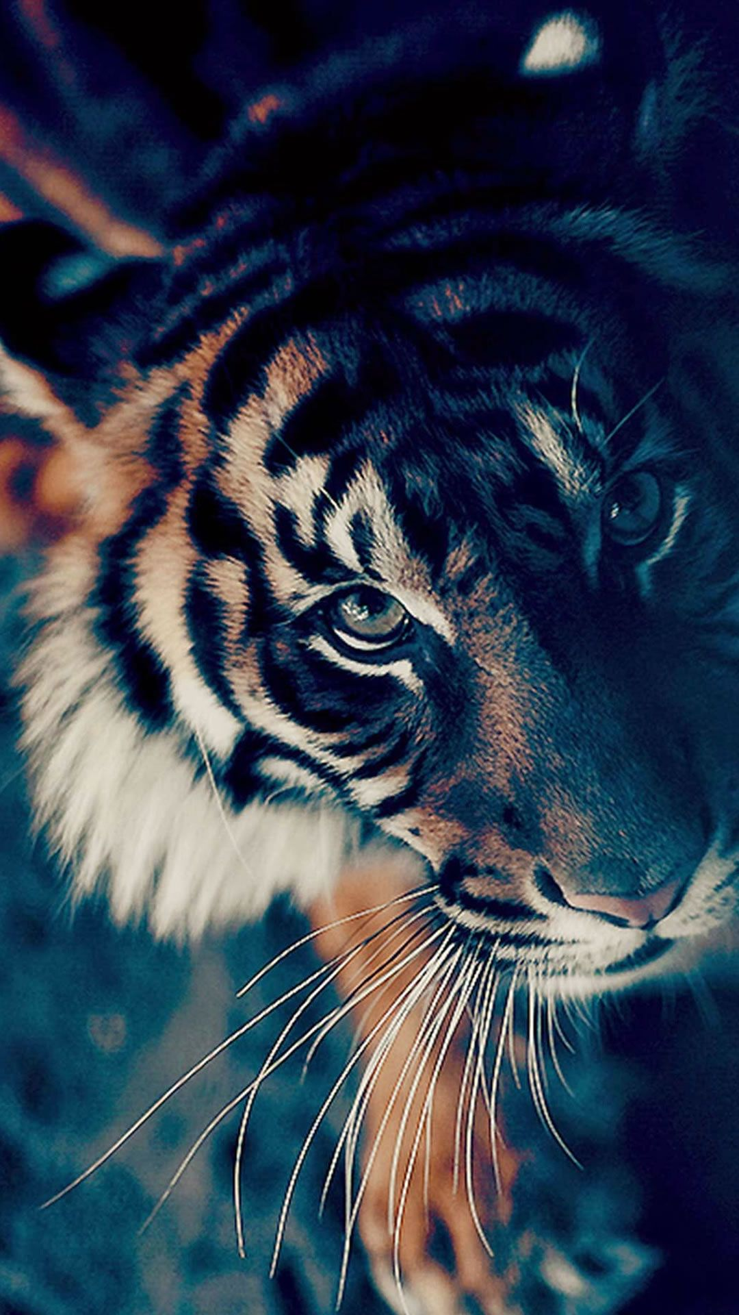 bengal tiger closeup iphone 6 wallpaper | animals | pinterest
