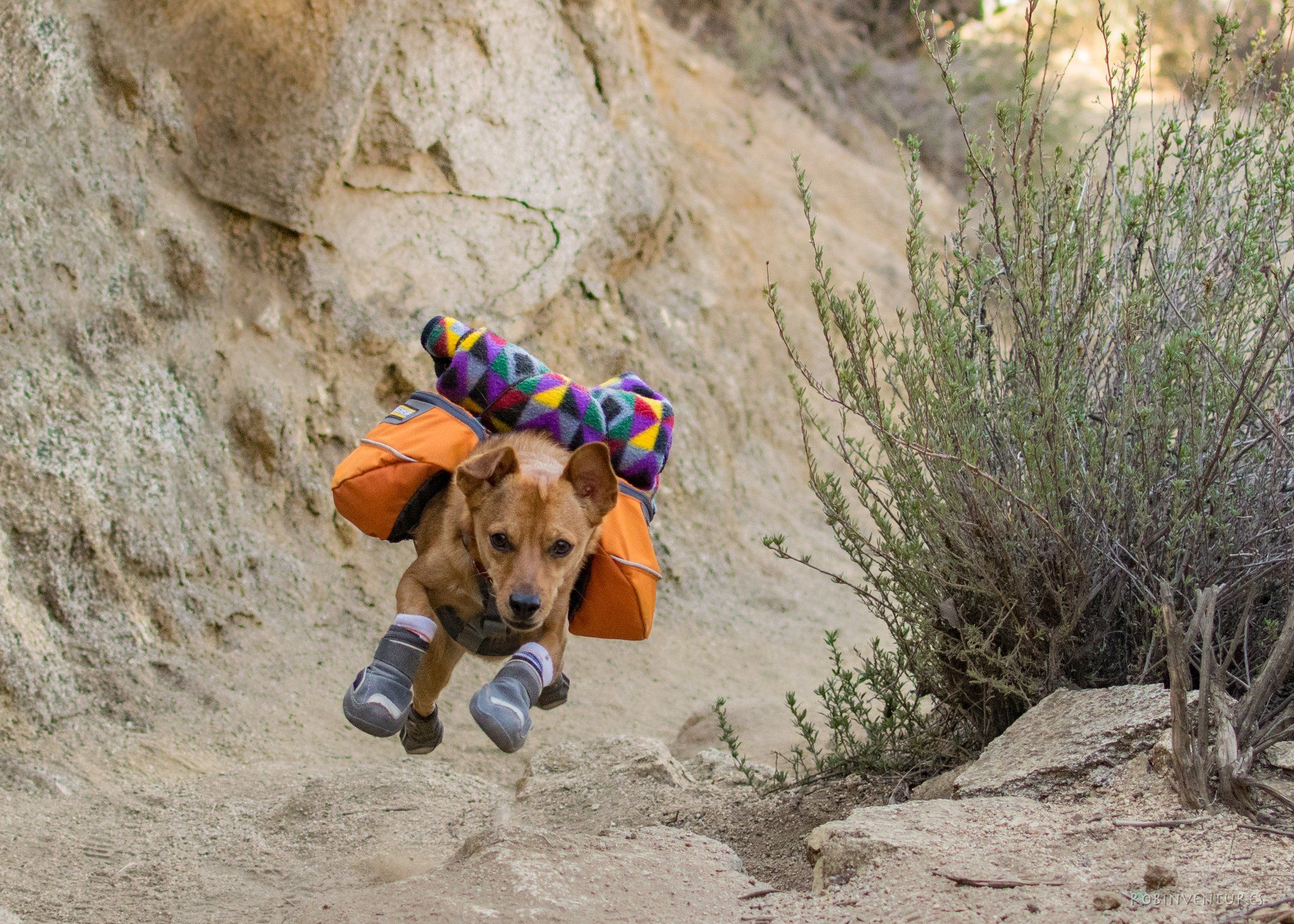 Boots N Snoots A Review On Boots For Your Dog Dog Adventure Diy Dog Backpack Cute Dog Toys