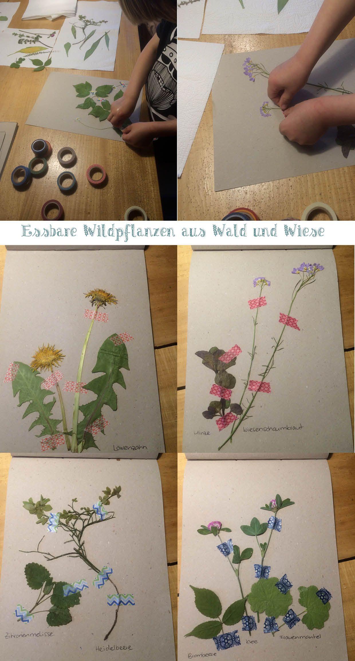 pressen trocknen kleben fertig ist das kleine herbarium zum thema 39 essbare pflanzen aus. Black Bedroom Furniture Sets. Home Design Ideas