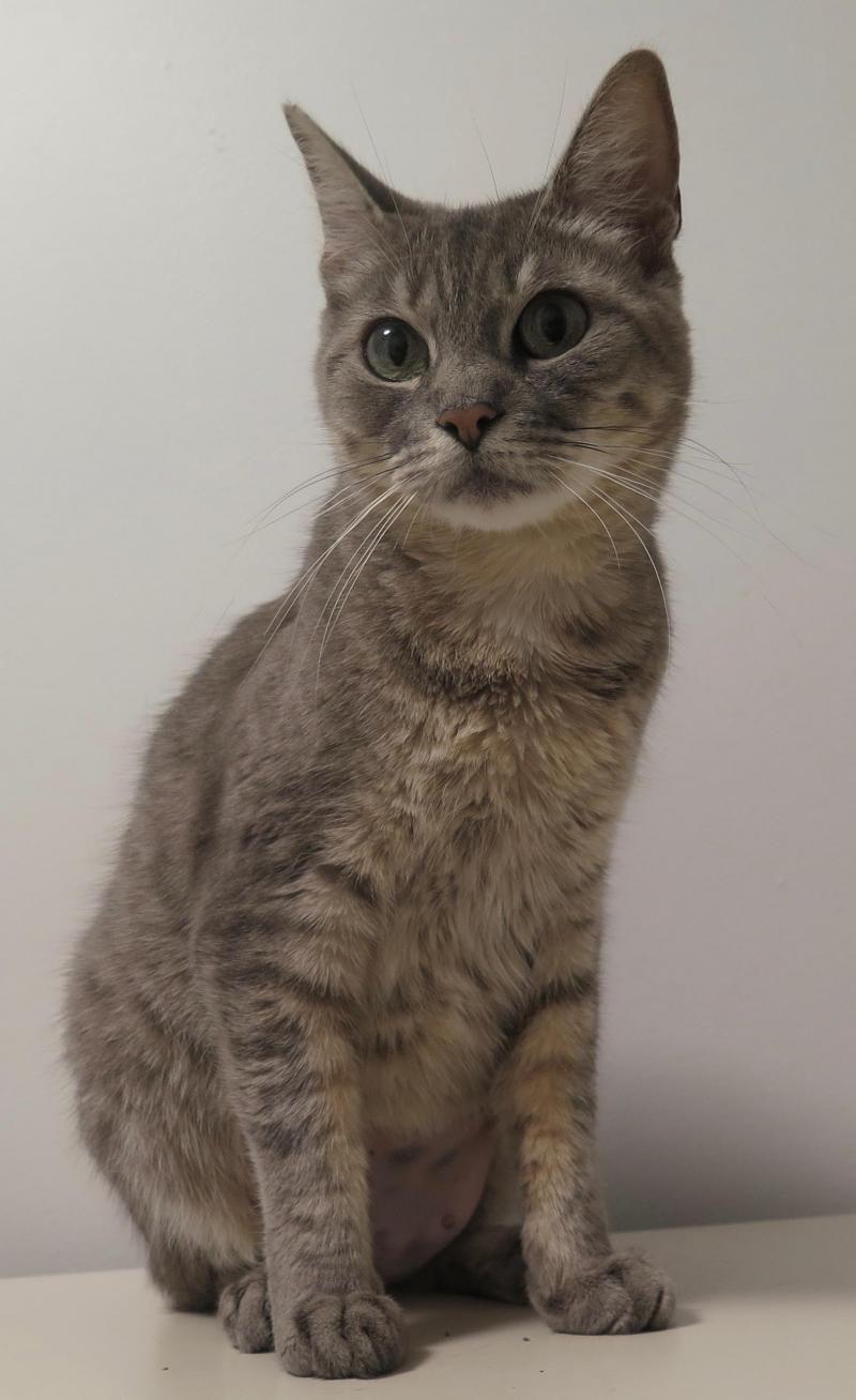 Adopt Maud on Cats, Pets, Animals