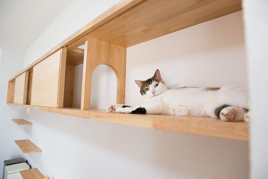 マイリノペット For ねこ フルリノベーションならマイリノ 猫の家具 ねこ インテリア リビング 猫