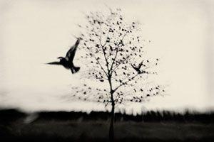 "Elena Lyakir ""black bird fly"""