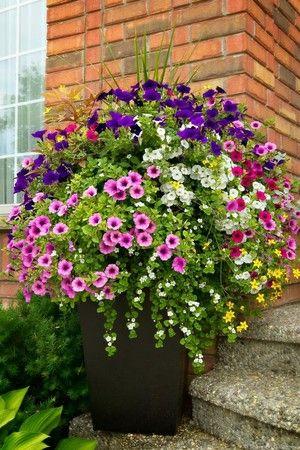 Imagen 35 Flower Containers Jardineria De Hortalizas En
