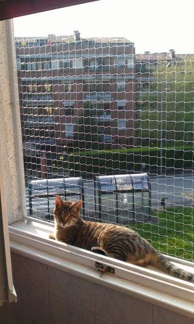 Recinzione Giardino Per Gatti.Recinzione Per Finestra Antifuga Cat Run Recinzione Antifuga