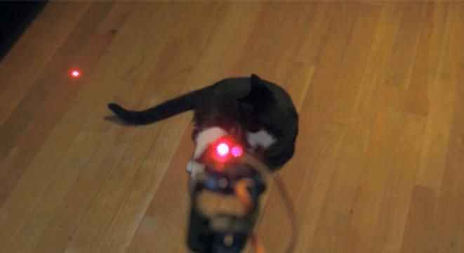 Keep Your Cat Entertained Forever With A Homemade Laser