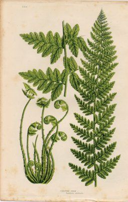 I want a fern back tattoo botanical reference for Botanical tattoo london