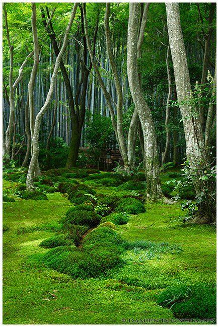 Moss garden in giyo ji temple garden design - Moosgarten kyoto ...