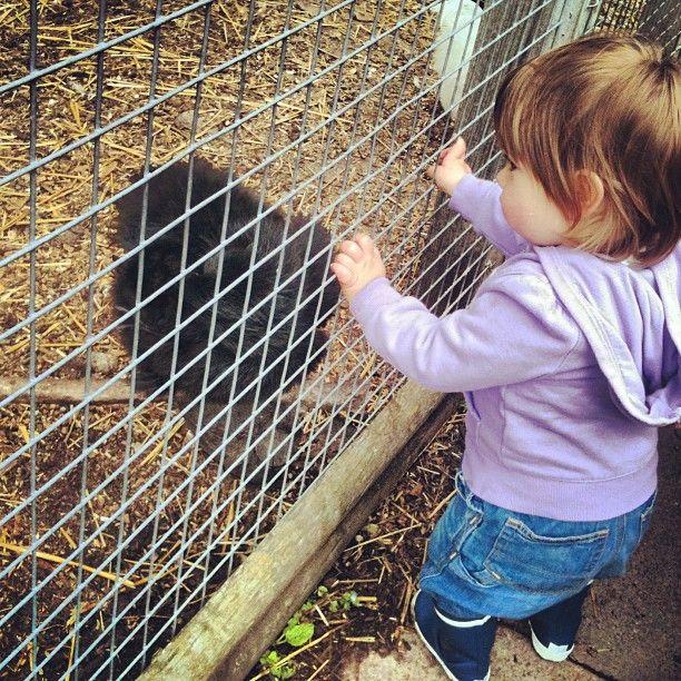 Emilia meets a silkie (weird black #chicken)