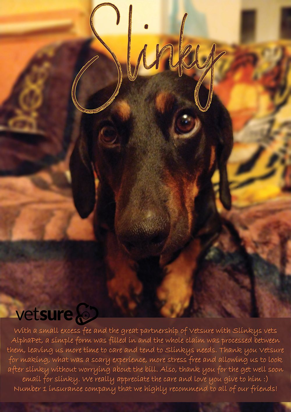 Slinky Sausagedog Review Cat Insurance Dog Insurance Dogs