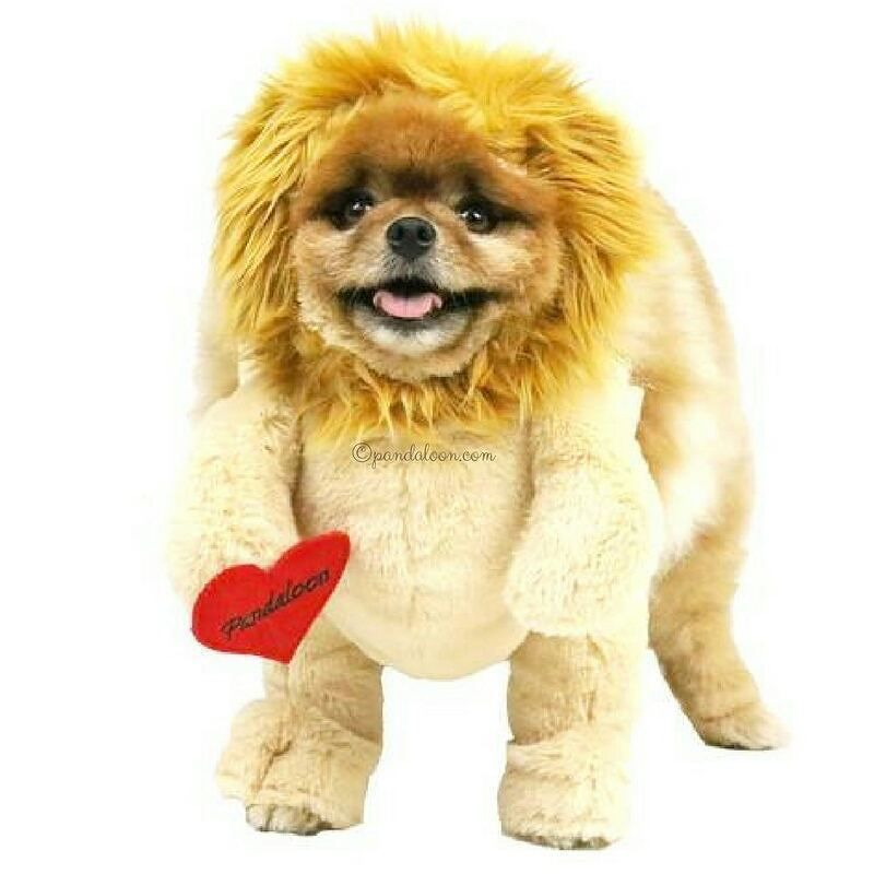 Walking Lion With Mane Dog And Pet Costume As Seen On Shark Tank