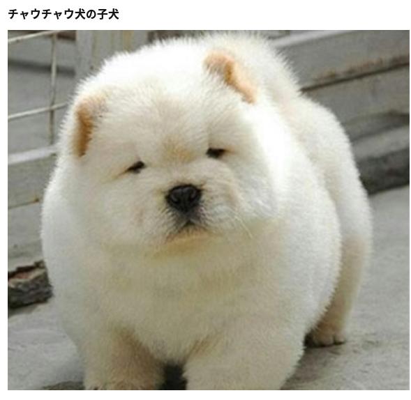 Great Korea Chubby Adorable Dog - 6a045a0b1ee97bd4f0a85da70eab574e  Gallery_271346  .png