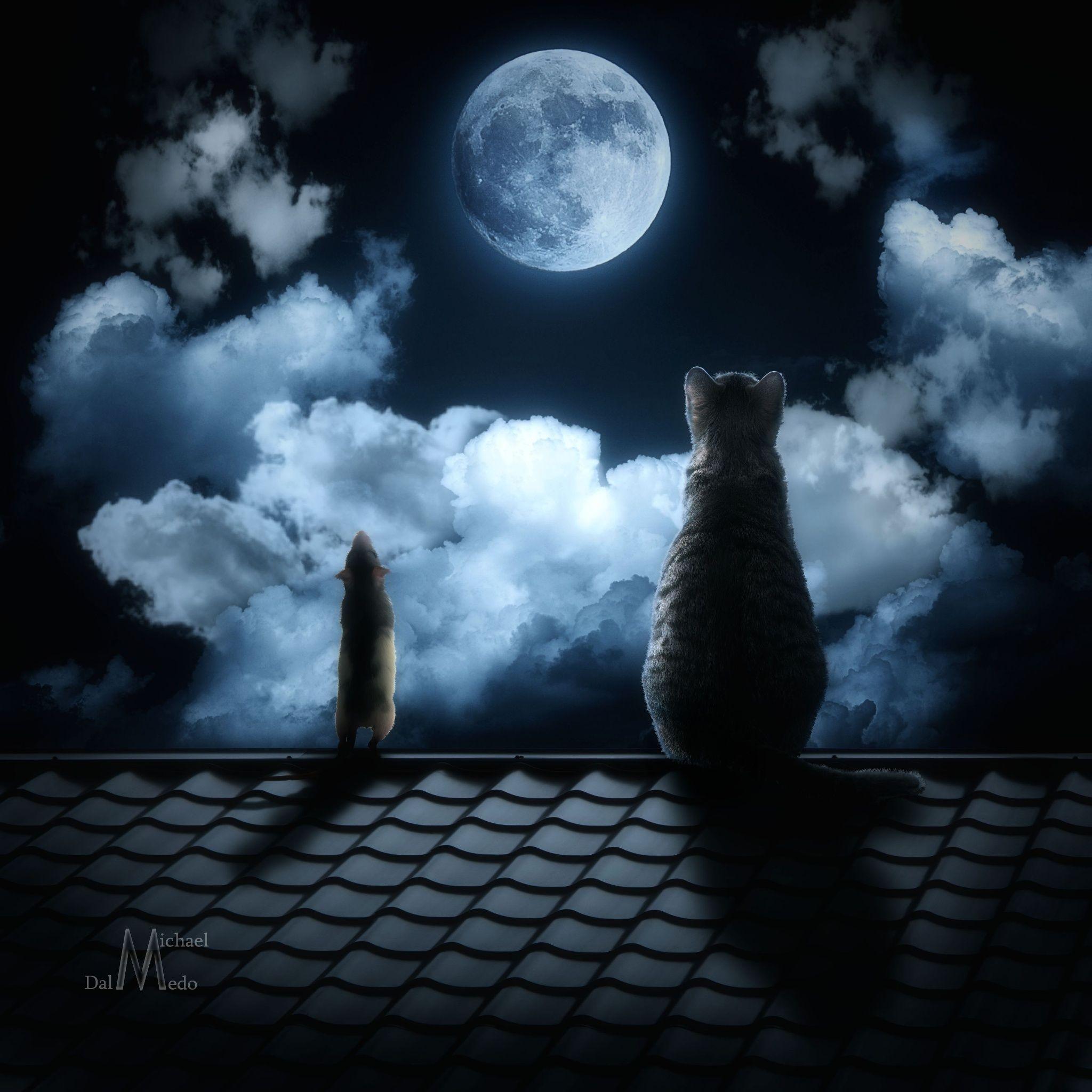 картинки ночь крыша луна расскажем