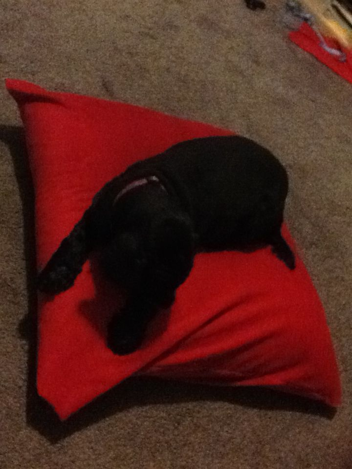 Dog on her new bed which I made for her this evening.