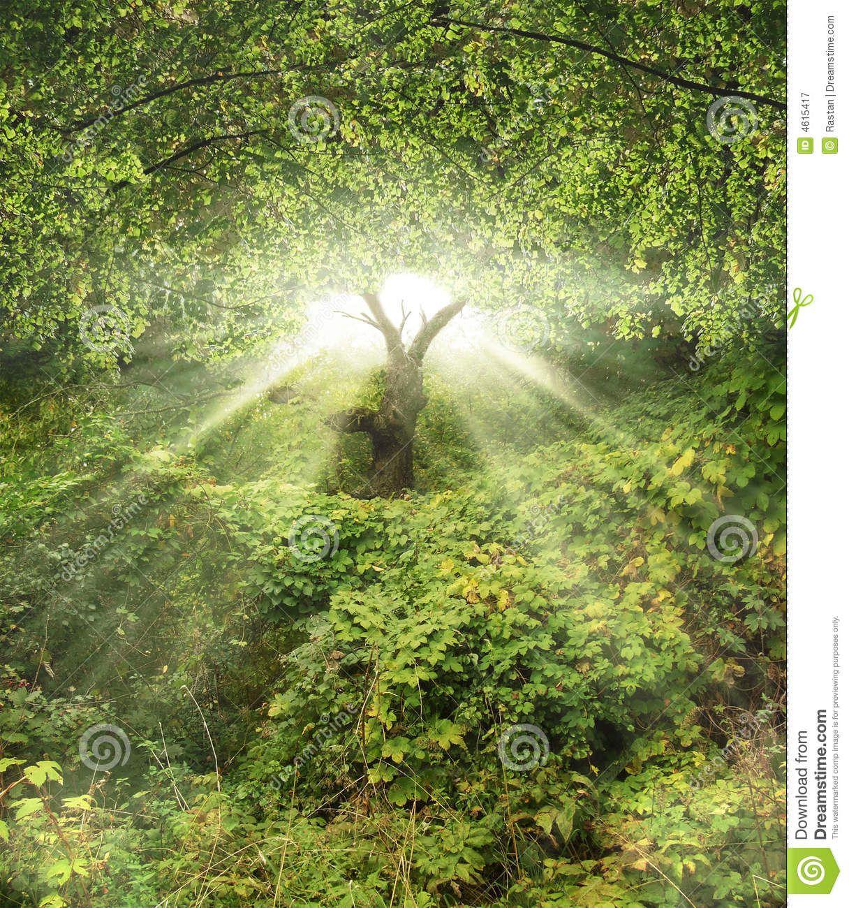 Garden Of Eden Landscape: Images Of The Garden Of Eden