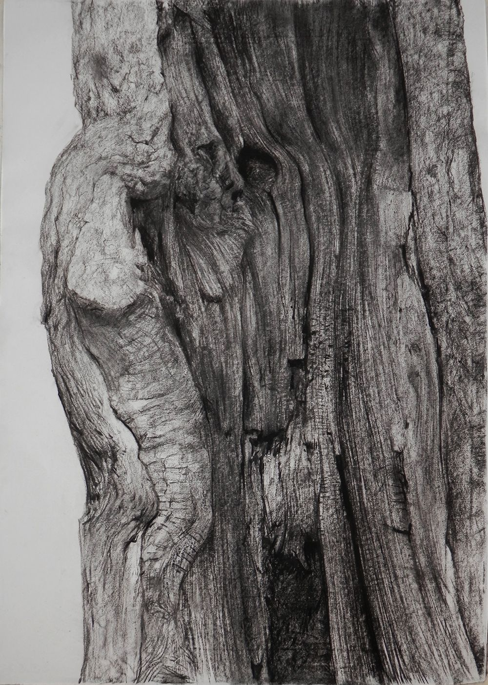 The Skin Of The Trees On Behance Charcoal Drawing Tree Drawings Pencil Nature Art Drawings
