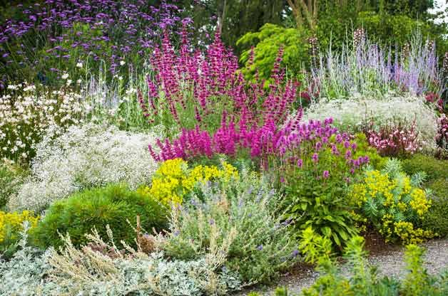 beat the heat in your backyard with these 40  drought resistant flowers and plants recommended