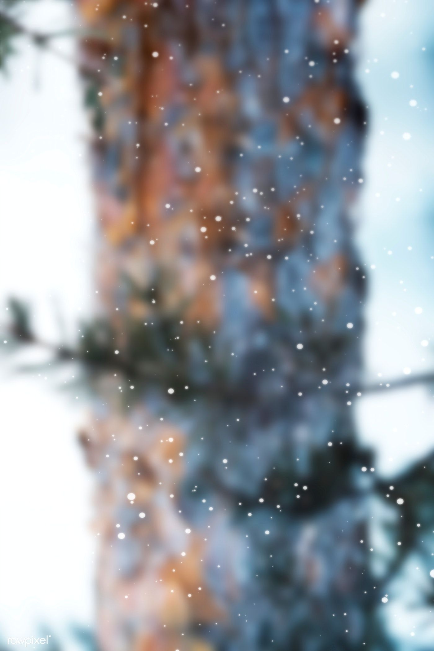 Download premium image of Pine branches in a snowy day