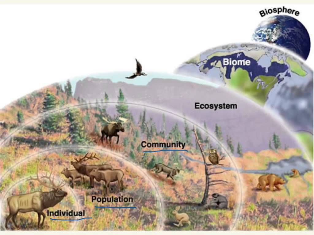 Ecological Levels Of Organization Worksheets