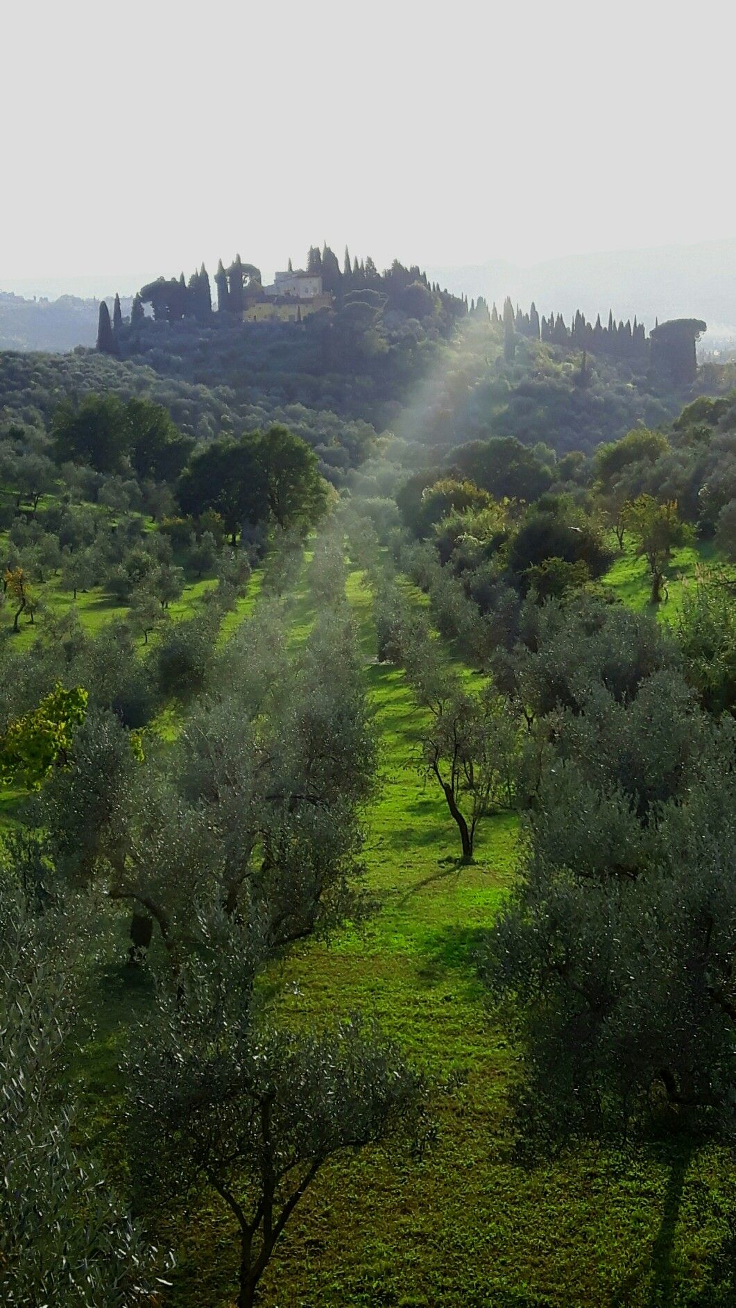 Le bellissime colline intorno a Firenze!