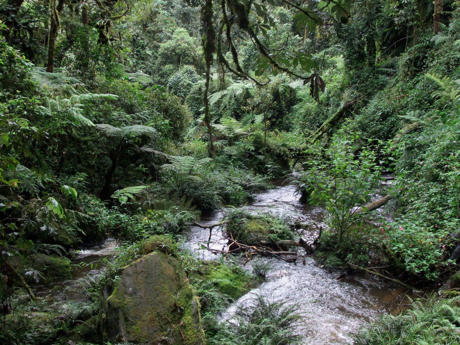 east african rainforest - Google Search | Places | Pinterest ...