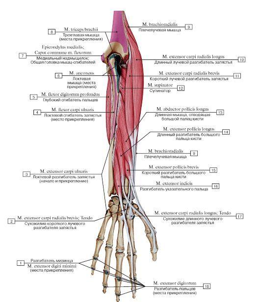 articulațiile picioarelor doare după alergare vindeca artroza articulației genunchiului