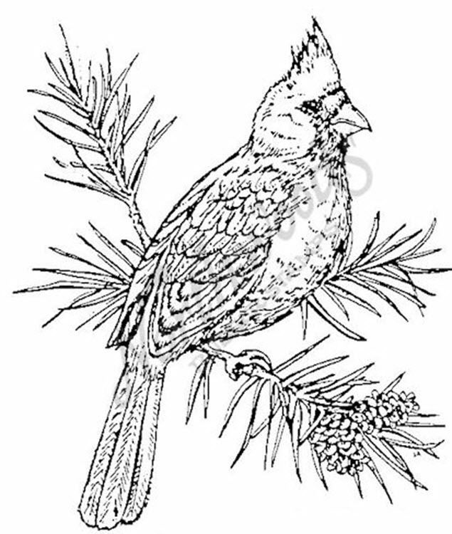 Northwoods Rubber Stamp Cardinal Bird on a Branch Pine Tree ...