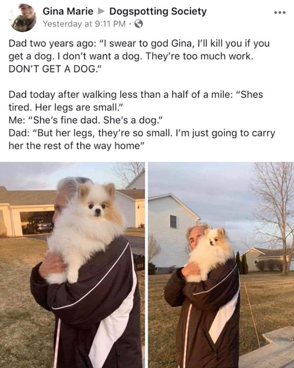 Aww Wholesome Dad Right Here Memes Cute Funny Animals Dog Dad Funny Memes