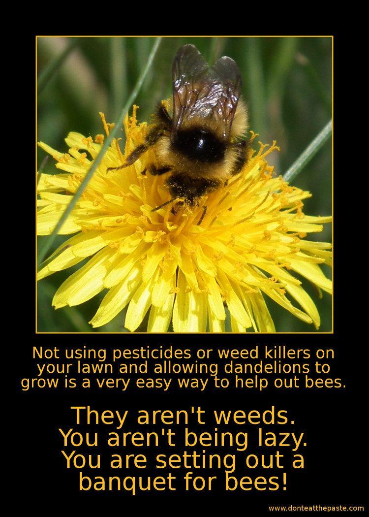 dandelions for bees honeybees and beekeeping pinterest
