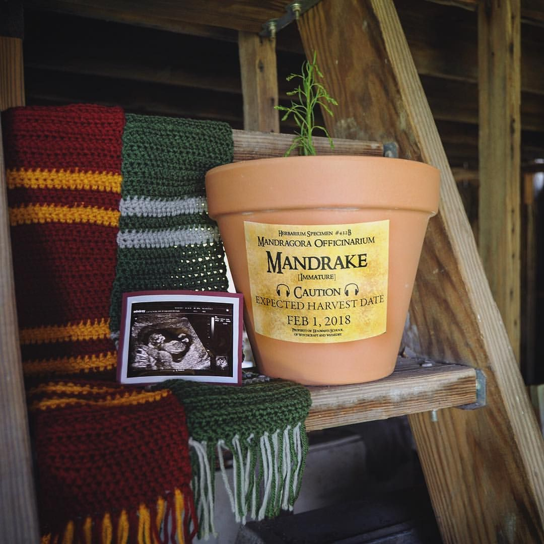 9d9ad595d2316 My Harry Potter mandrake themed pregnancy announcement @paigeandlaith on  Instagram