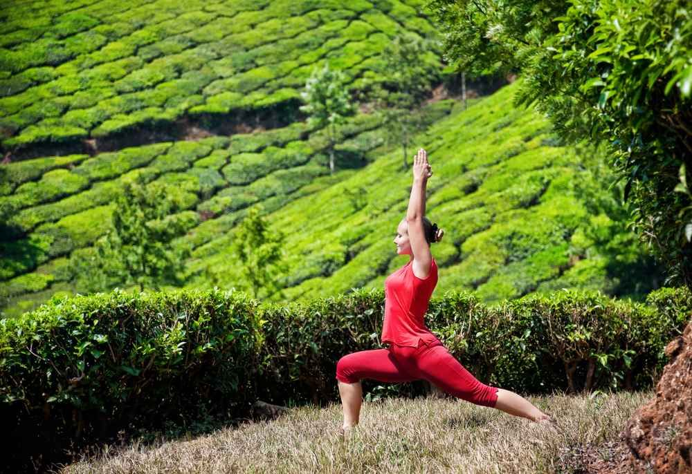 Pin by Alluring India Tour on Munnar Scenic destinations