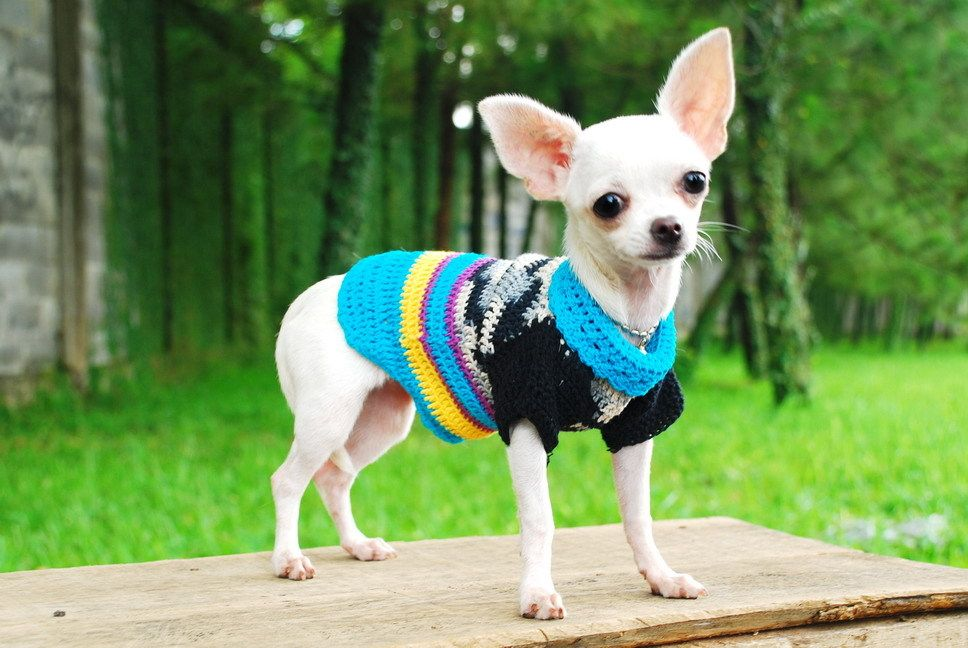 Pet Clothes Xs Chihuahua Sweater Blue Strip Dog Clothing Unique
