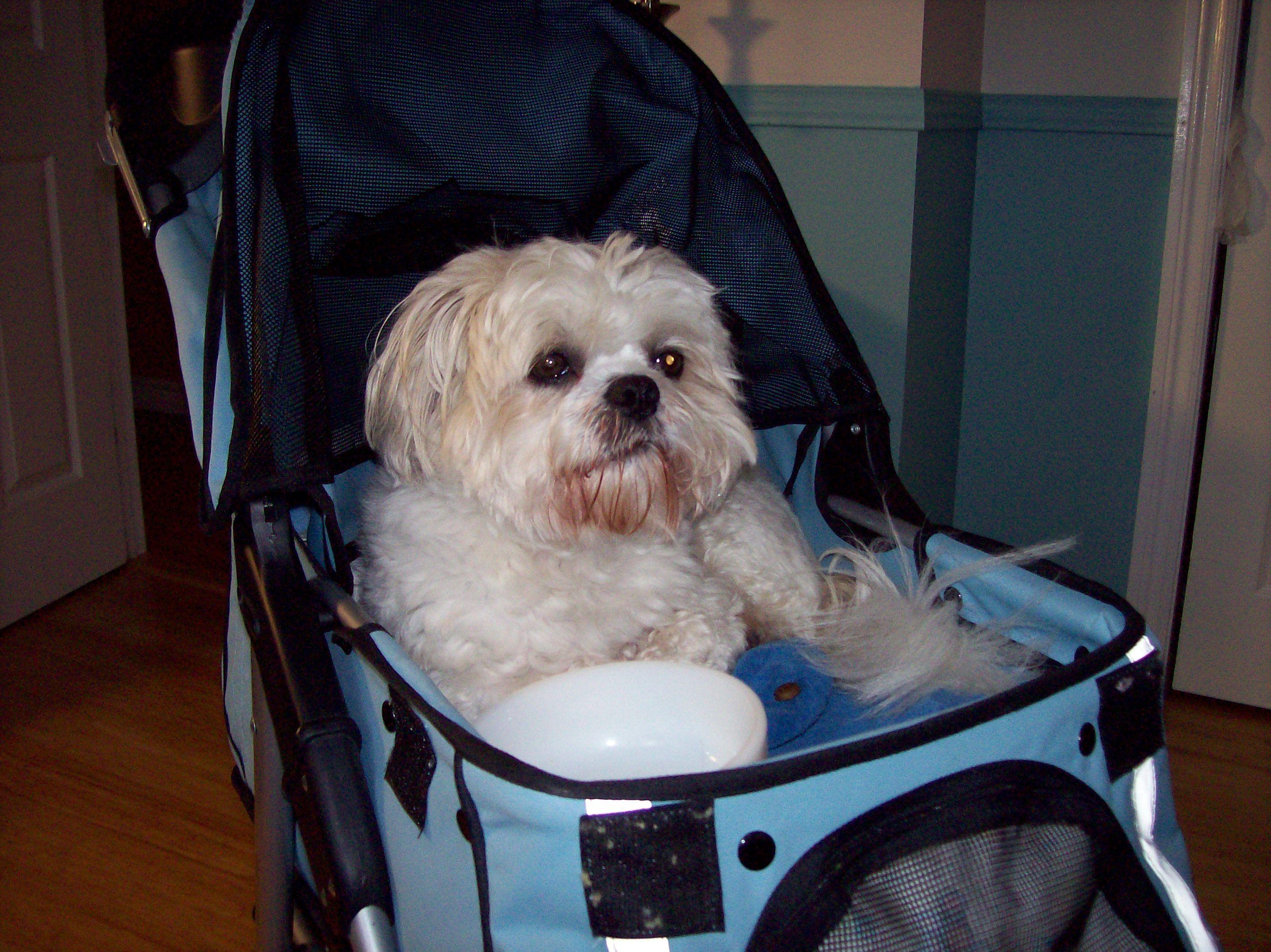 For A Comfortable Ride Dog stroller, Pet stroller, Shih tzu