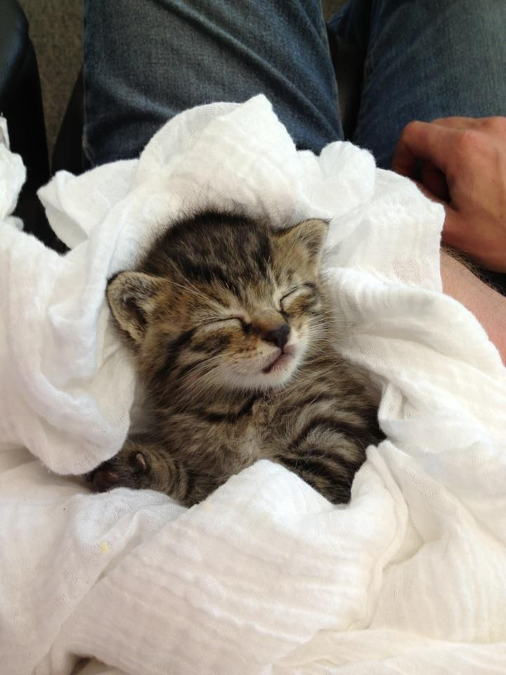 I M Not Too Tire Zzzzzzzz Cute Animals Cats And Kittens Sleeping Kitten