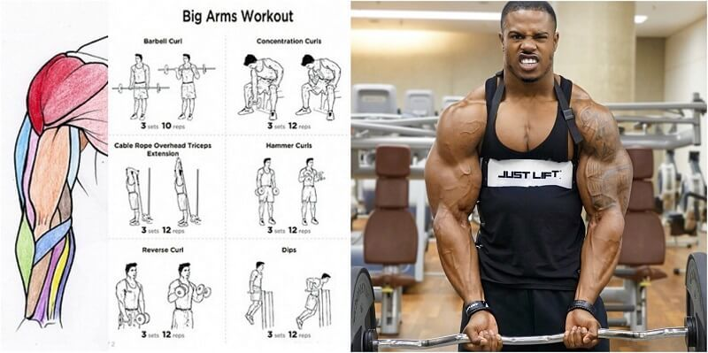 See How To Get Bigger Arms In Three Steps Project Next Dumbbell Bicep Workout Big Arm Workout Biceps Workout