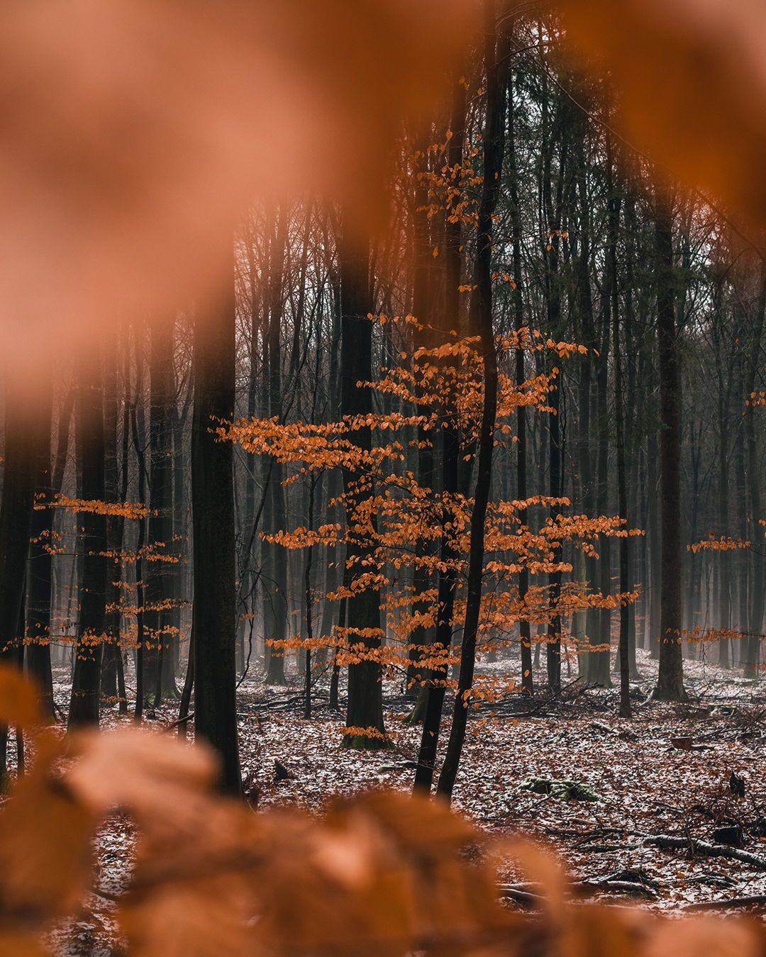 Pin On Forest Photography